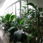 Atrium lower