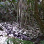 Bush Walking Track Mt Tamborine