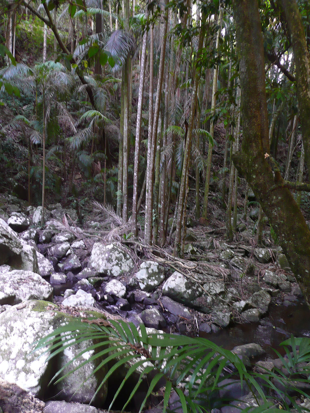 Bush Walking Track Mt Tamborine