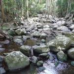 Creek Bed Mt Tambourine