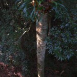 O'Reillys rainforest